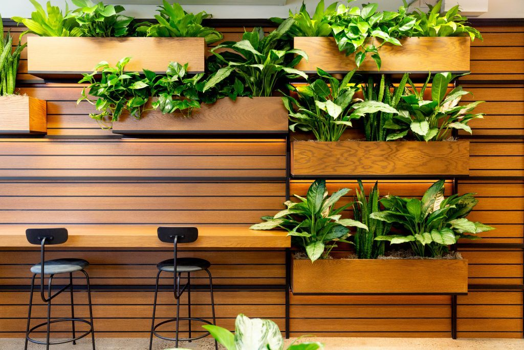 Plants have a number of benefits in the office.