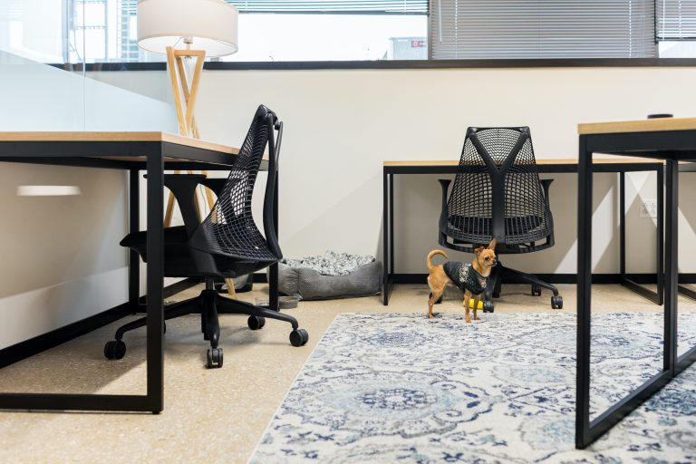 Be sure to puppy-proof your space before celebrating national Take Your Dog to Work Day.